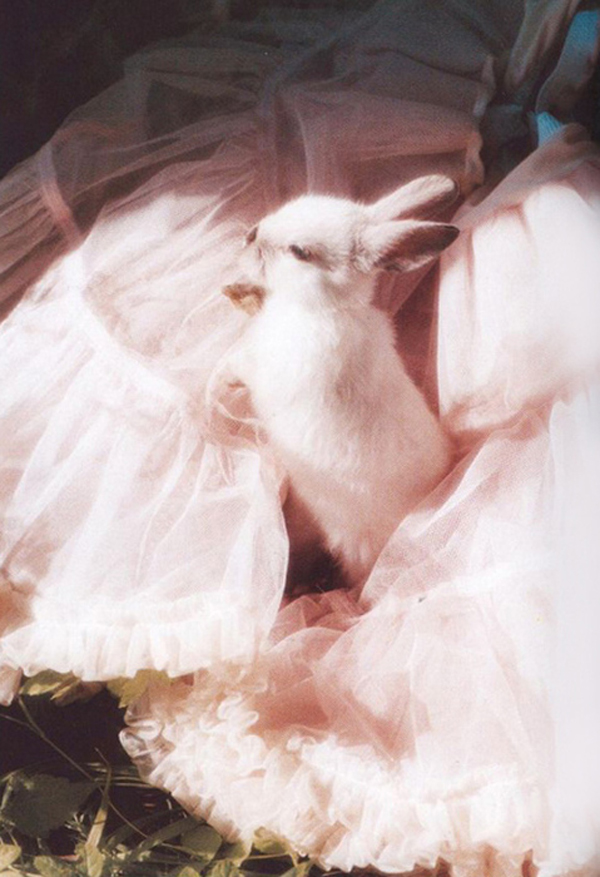 rabbit pink photography inspiration