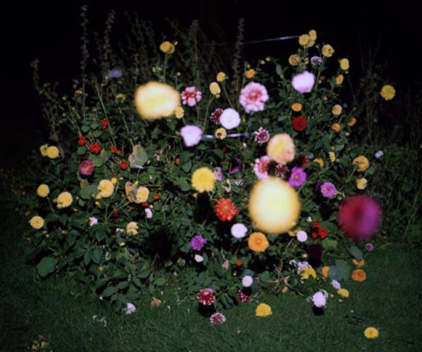 flowers snapshot