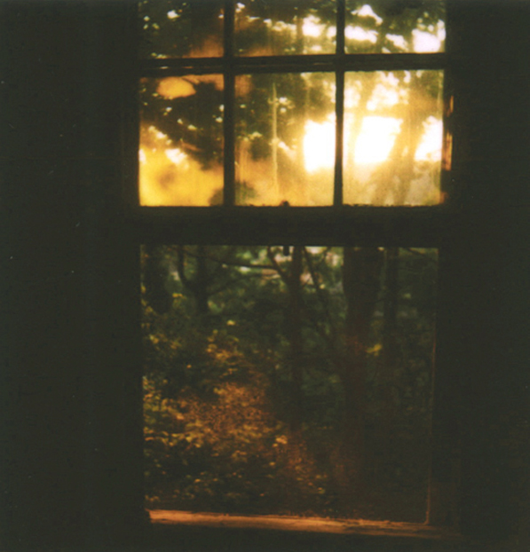 window, forest, house