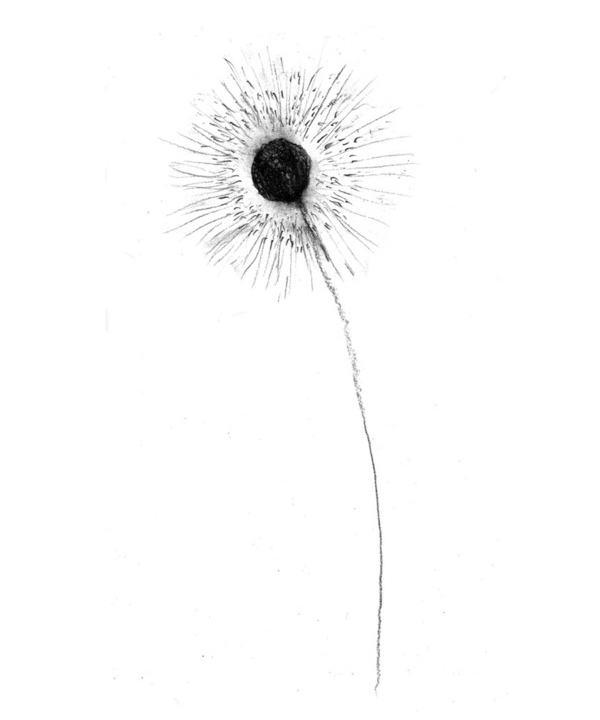 illustration flower