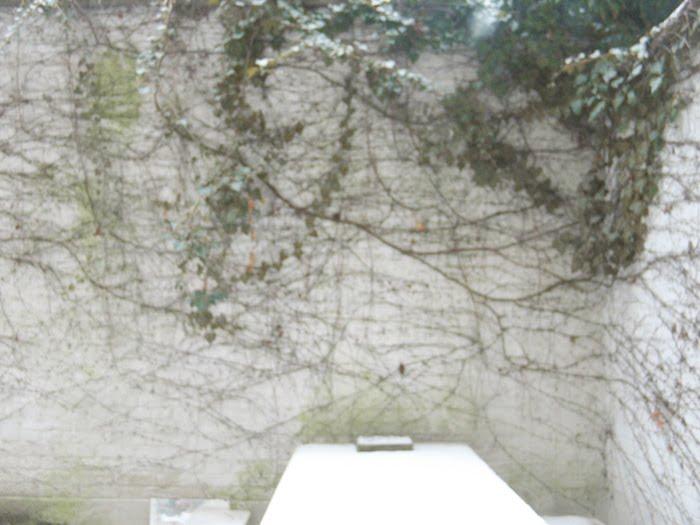 antwerp-garden