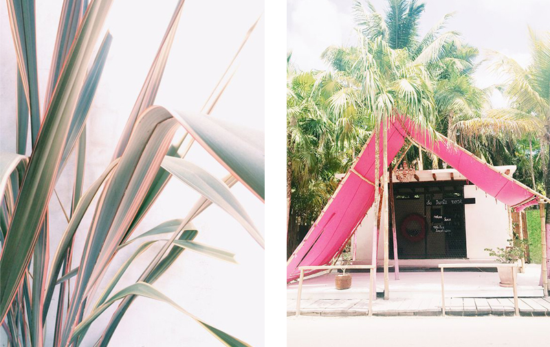 pink plants palm trees inspiration